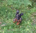 zarah-hoppla-i-skogen.jpg