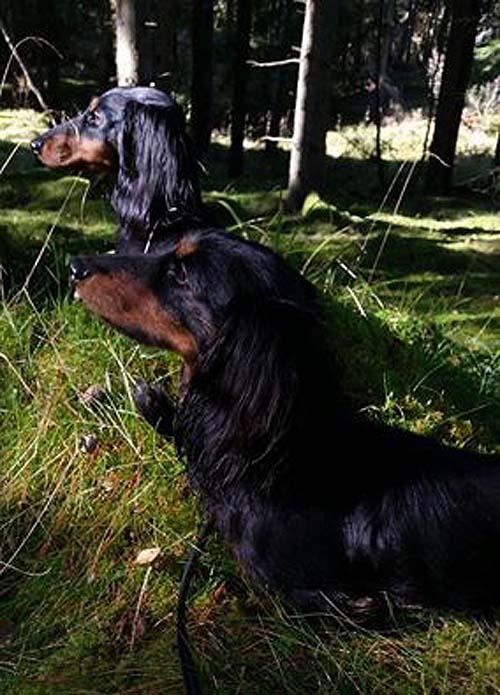 Pottie och Ringo i skogen